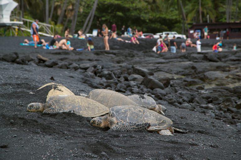Black Sand Beach & Turtles on Big Island