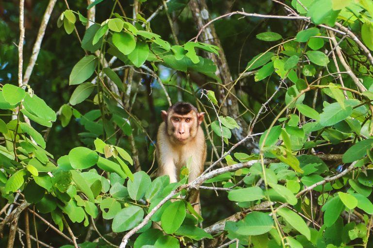 3-day, 2-night Kinabatangan Wildlife River Cruise