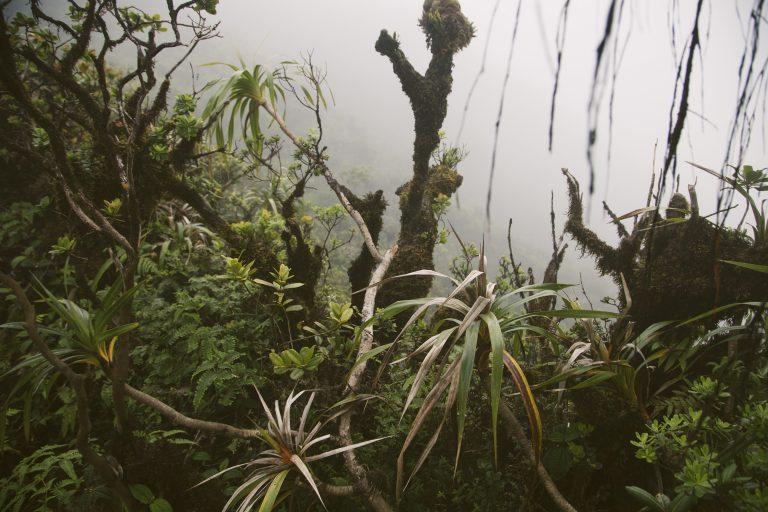 An Introduction to Hawaii's Beautiful Nature