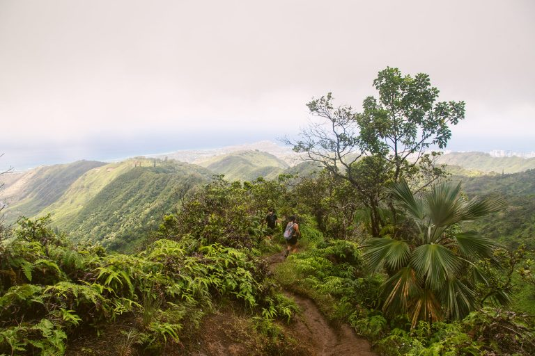Best Oahu Hikes to Find Tropical Fruit – How and When to Find Them