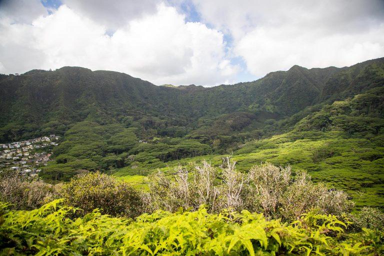 Easy Pu'u Pia Hike – Manoa Valley