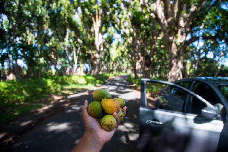 Mango Road on the Big Island